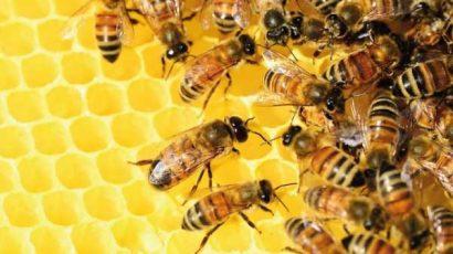 La apicultura fue declarada de interés provincial